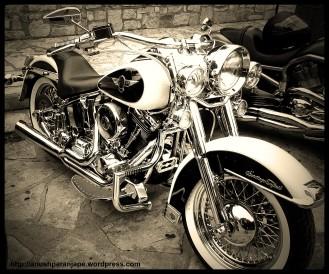 Display of Harley bikes