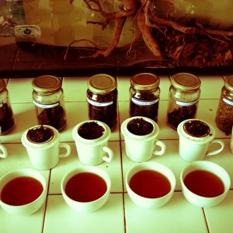 Tea Tasting ceremony